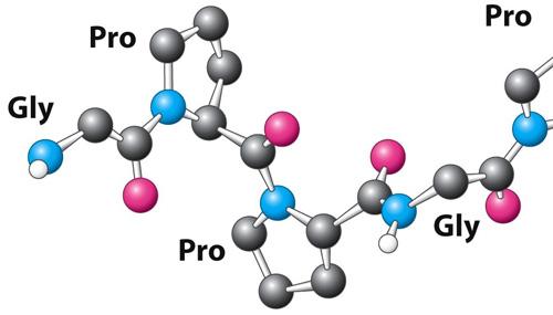 Όλα όσα πρέπει να ξέρουμε για το κολλαγόνο